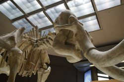 mammoth-1257274_1920