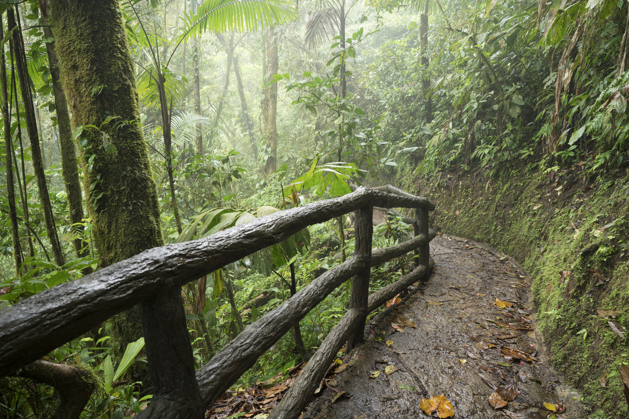 Path to magic