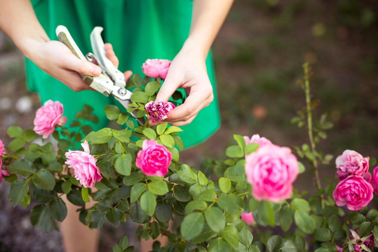 care of garden