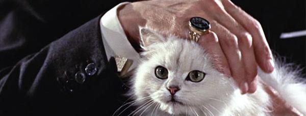 007-cat