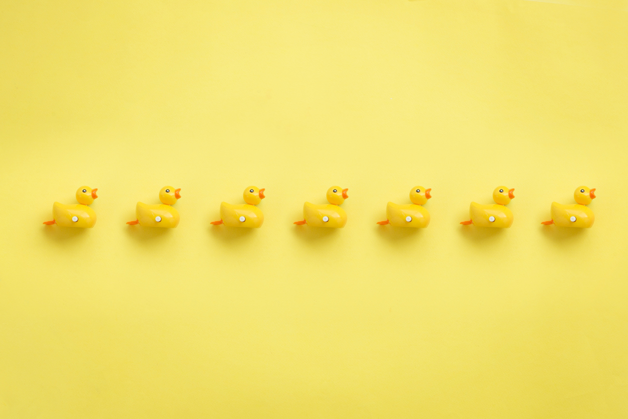 Line of yellow rubber duckies.